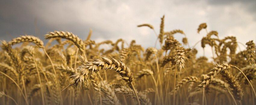 Særlige forhold ved køb af nødlidende landbrug